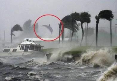 Foto mostra suposto golfinho sendo arremessado em razão da força do Dorian – Reprodução Facebook