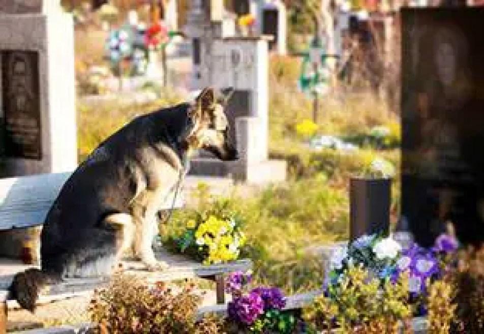 Nossos animais falecidos podem nos visitar