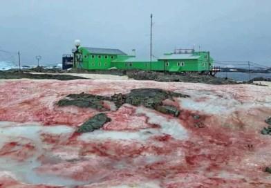 A neve da antártica se torna vermelha como sangue outro sinal apocalíptico