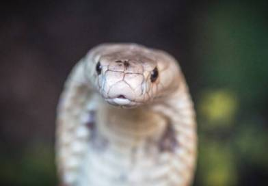 Adolescente afirma que a mesma cobra o mordeu 8 vezes em um mês