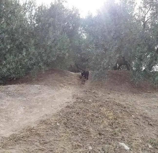 """Autoridades procuram uma """"pantera fantasma"""" na Espanha"""