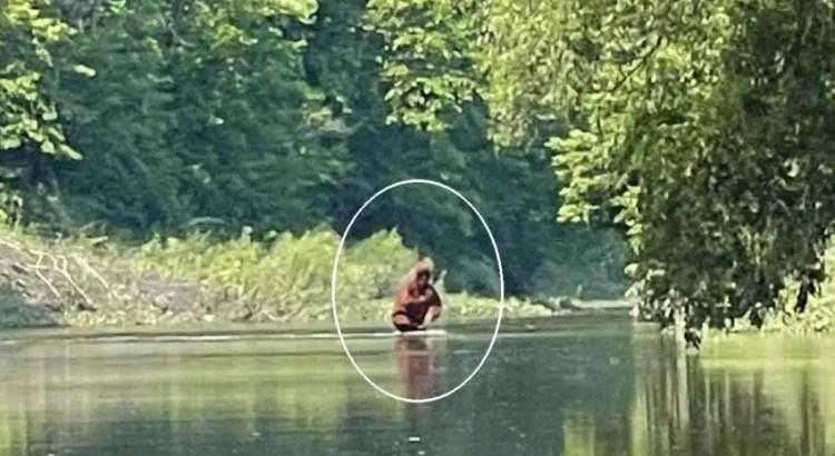 Filmaram um Pé Grande carregando seu filho em um rio.