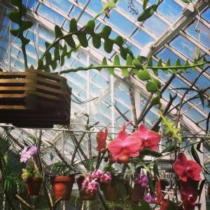 conservatoryofflowers