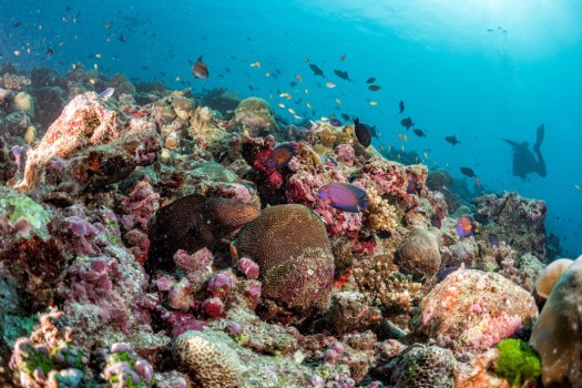 Maldives-corals-house-Fishes-underwater landscape