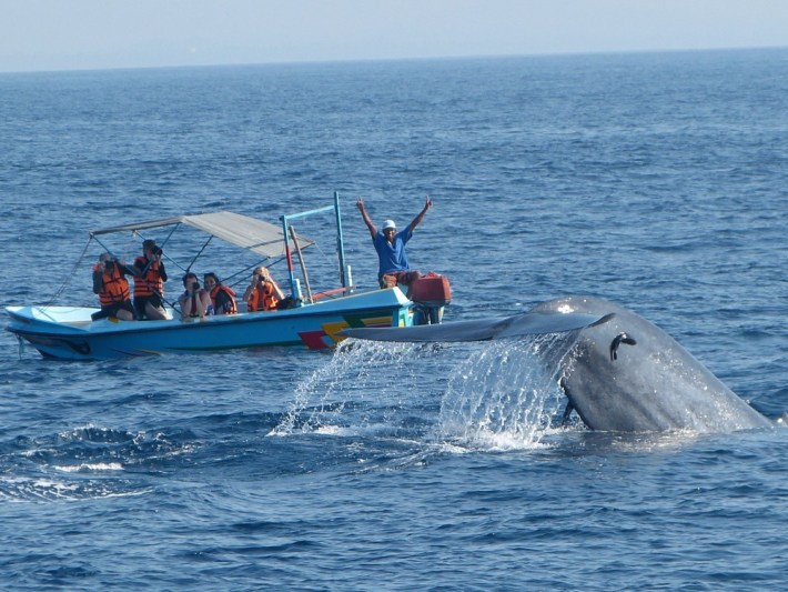 velryby-sri-lanka