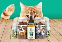 Benefits of CBD Oil Cat treats