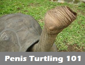 Penis Turtling prevention method