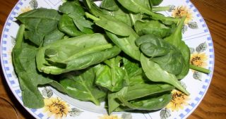 Cream of Spinach