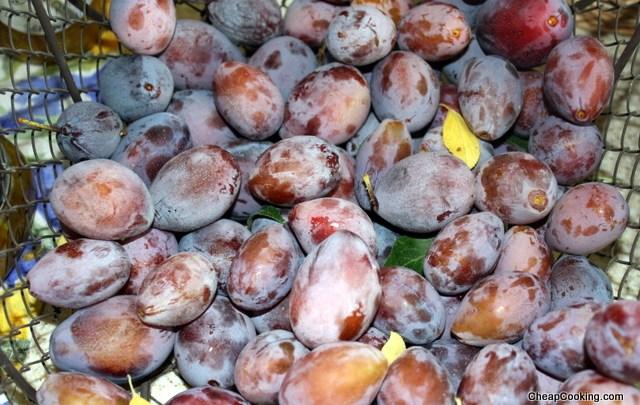 Plum Jam from Italian Plums aka Prune Plums