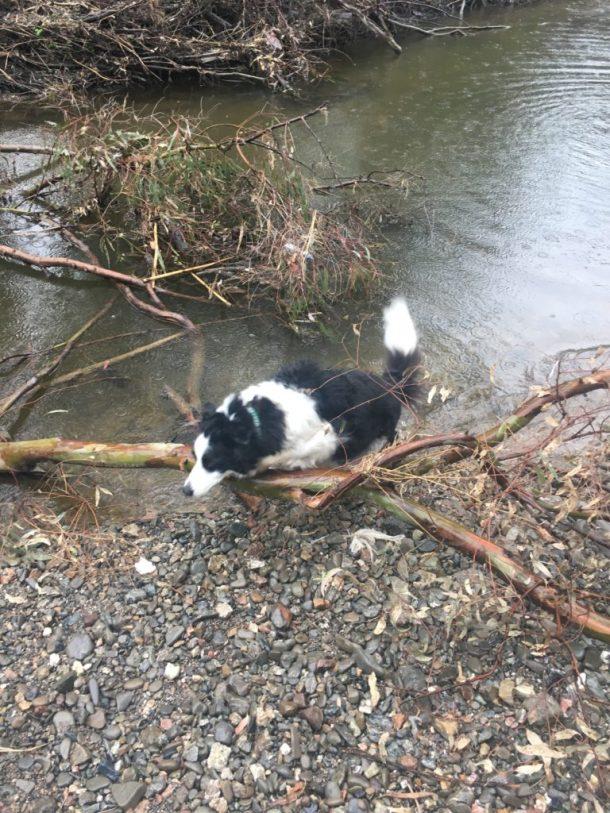 Kayden at the Creek