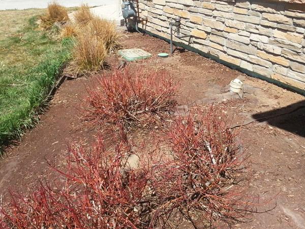 Landscape bed before removing landscape fabric