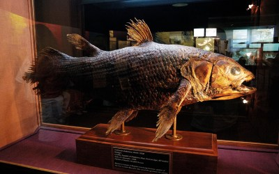 A Trip To East London & Discover The Very First Coelacanth
