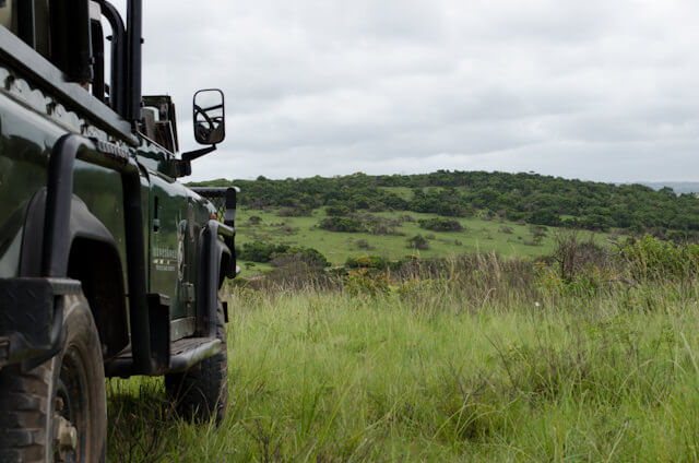 Experience A Classic African Safari Adventure In South Africa's East London