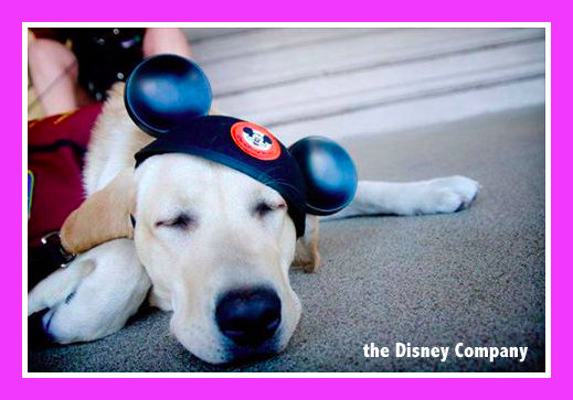 can you bring dogs into Disney theme parks