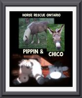 Horse andKnitted Donkey for Horse Rescue Ontario