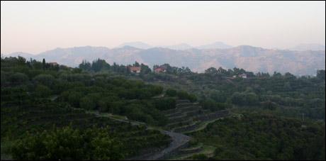 Terraced vineyards in Mt. Etna