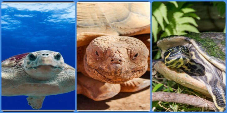 What do you know about Turtle, Tortoise and Terrapin?