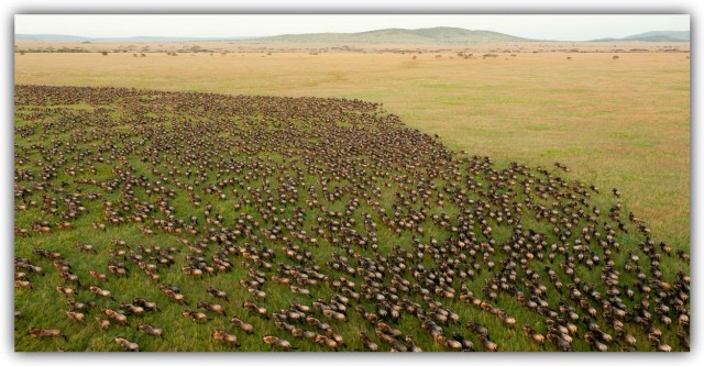 The migration involves almost two million animals