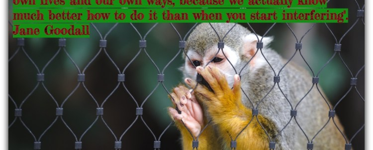 Understanding Captivity of Wildlife (Demo)