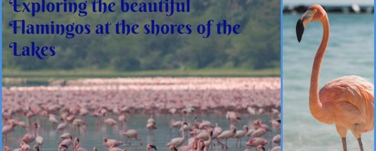 Exploring the beautiful Flamingos (Demo)