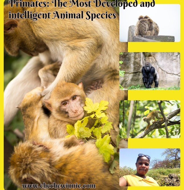 Primates: The Most Developed and intelligent Animal Species