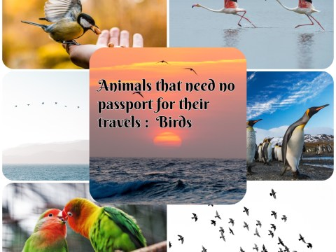 Animals that need no passport for their travels : Birds