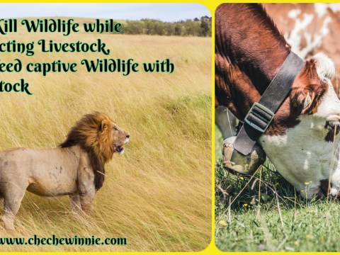 We Kill Wildlife while protecting Livestock, But feed captive Wildlife with Livestock