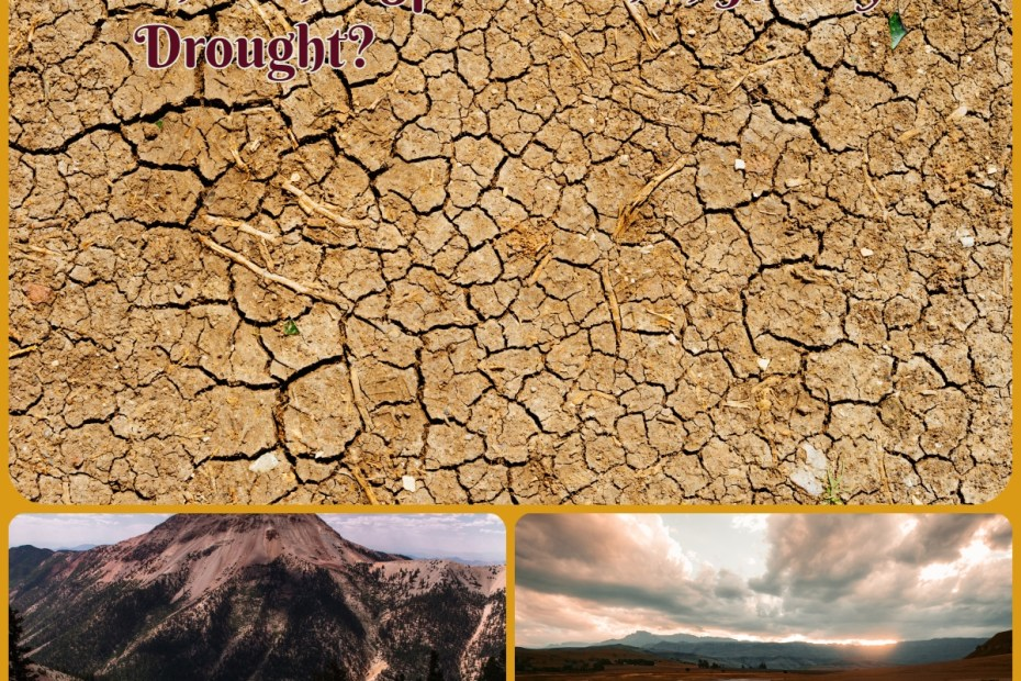 What Happens To the Wildlife and other Species when Hit By Drought?