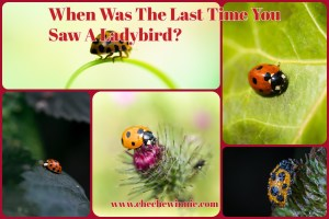 When Was The Last Time You Saw A Ladybird?