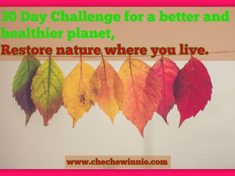 30 Day Challenge for a better and healthier planet, Restore nature where you live.