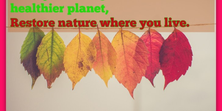 30 Day Challengefor a better and healthier planet, Restore nature where you live.