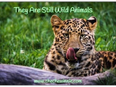 They Are Still Wild Animals