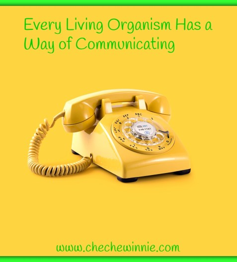 Every Living Organism Has a Way of Communicating