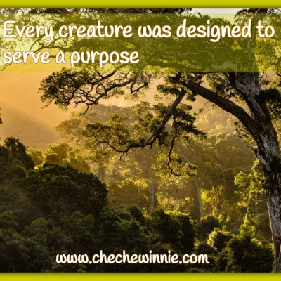 Every creature was designed to serve a purpose