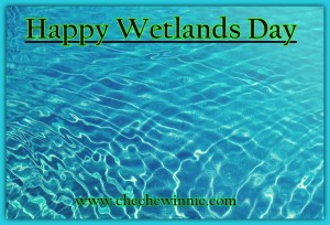 Happy Wetlands Day