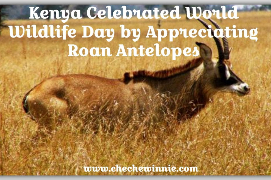 Kenya Celebrated World Wildlife Day by Appreciating Roan Antelopes