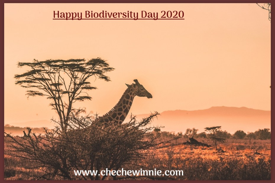 Happy Biodiversity Day 2020