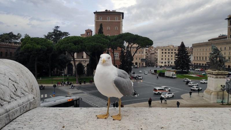 כיכר ונציה רומא