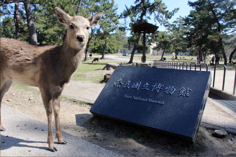 נארה פארק יפן