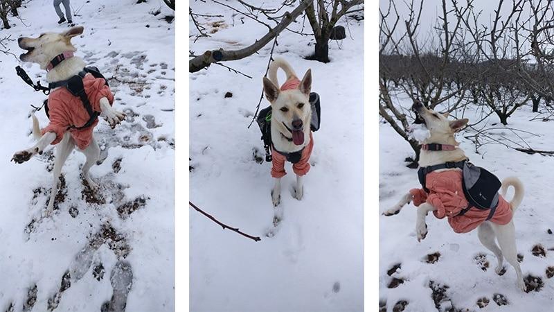 טיולים מסלולי טיול בארץ עם כלב