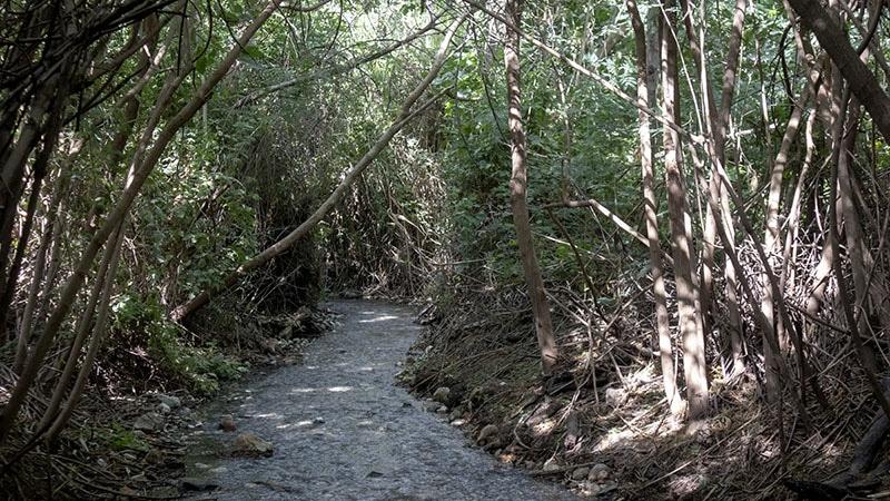 יער פראי בעמק המעיינות