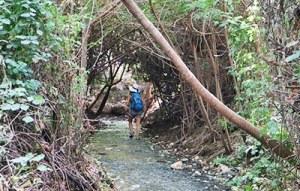 השביל הרטוב מעין שוקק לנחל שוקק