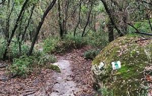 שביל הבאר ביער חניתה