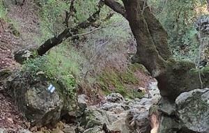 יער ברעם