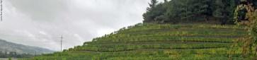 Back Road Vineyard Napa