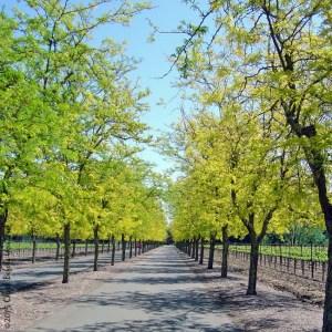 Sterling Vineyards driveway