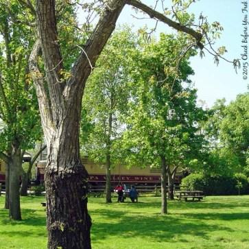 V. Sattui Winery picnic area