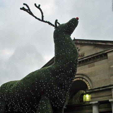 Deer in front of Covent Garden Market - London, England