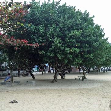 Trees with benches at Hung Shing Yeh Beach, Lamma Island - Hong Kong, China