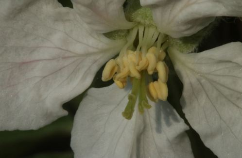 flower macro photo blossom